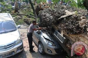 Tragis! 2 Pelajar Meninggal Tertimpa Pohon Tumbang