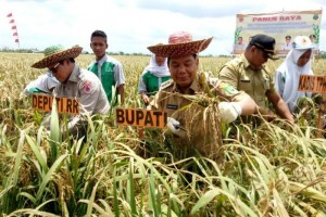 Bupati Kapuas-Deputi BNPB Panen Raya