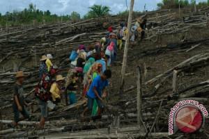 Pembukaan Lahan Padi Ladang Barito Utara Berkurang