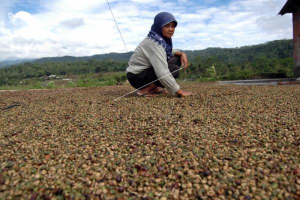 DPRD Seruyan Dukung Pengembangan Perkebunan Kopi