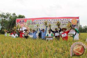 Bupati Bartim Panen Padi Hazton, Per Hektar Hasilkan 9,5 Ton