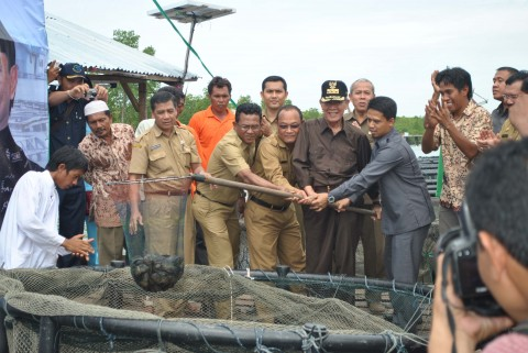 Gubernur Kepri Panen Perdana Kerapu Nelayan Karimun