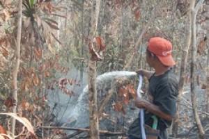 BKSDA: Hutan di Barelang Sengaja Dibakar