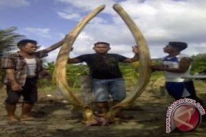 Gading Gajah Mina