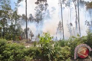 Pemerintah Natuna dan Provinsi Diharapkan Tanggap Kebakaran