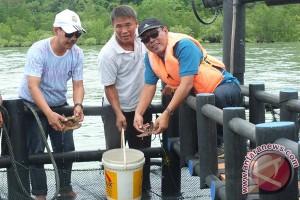 Undip-Stargold Kembangkan Karamba Ramah Lingkungan di Karimun