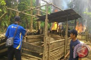 Ditpam Bongkar Peternakan Babi Dekat Hang Nadim