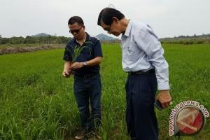 Thailand Jajaki Kerjasama Pertanian Organik di Lingga
