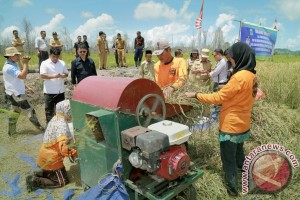Proyek Sawah Organik Lingga Berhasil Panen Perdana