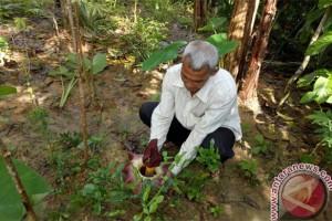 Warga Tanjungpinang Dihebohkan Penemuan Bunga Bangkai