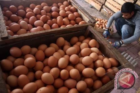 Harga Telur Di Waykanan Naik