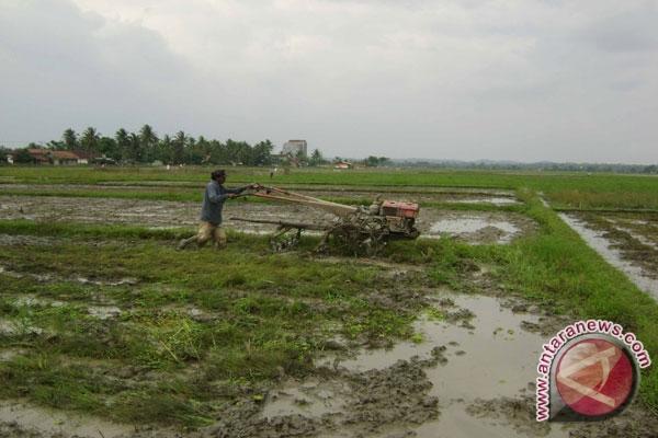 Meski sedang musim hujan, pasokan beras banyak