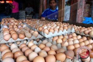 Harga Telur Di Bandarlampung Bertahan
