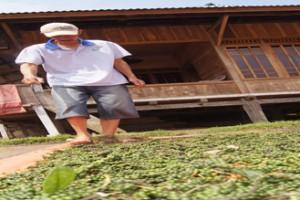 Permintaan Lada Lampung Menurun
