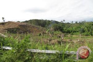 Nasib hutan liar terakhir di Eropa