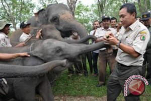Orasi Menhut Pada Jambore ASBO PW IPM Provinsi Lampung