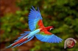 Turis Asing Kepincut Taman Burung