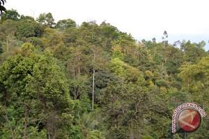 Lampung Selatan Tanam 400 Pohon Tembesi