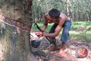 Karet Lampung Dijual Ke Padang