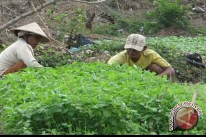 Harga Sayuran Naik Jelang Idul Adha