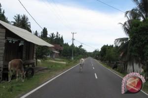 Peternak di Lampung mulai sulit dapatkan rumput