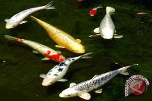 Indonesia Terdepan Kelola Ikan