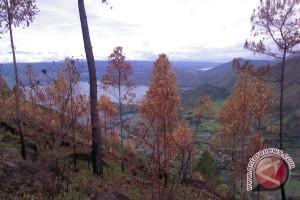 Presiden tanam pohon penghijauan di Samosir