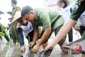 Lampung Selatan Kembangkan Padi Organik