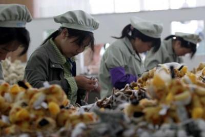 China capai tingkat pengangguran terendah