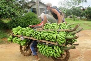 Harga Pisang Di Desa Naik
