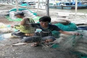 Lampung Timur mulai larang cantrang dan trawl