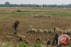 Warga Way Dadi Bandarlampung mengadu ke DPD