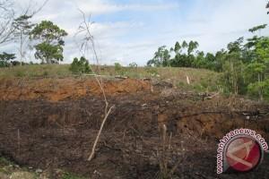 Hutan rusak bakal direhabilitasi dengan tanaman buah