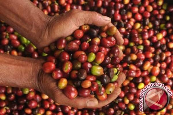 Ekspor Kopi Lampung 14.321 Ton