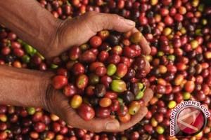 Kopi organik Lampung makin diburu