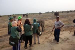 Konservasi Gajah TNWK Lampung makin diminati wisman