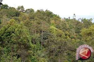 Peneliti: Hutan Mampu Lindungi Daratan Dari Badai