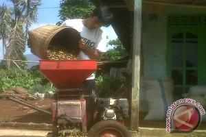 Produksi kopi Lampung anjlok