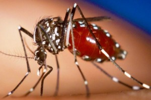 29 derajat Celsius, temperatur terbaik bagi nyamuk untuk sebarkan penyakit