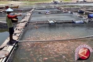 Indonesia harus perkuat pengembangan benih perikanan