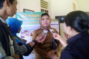 Pembibitan Sapi Di Lampung Capai 13.771 Ekor