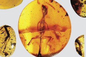 Ditemukan fosil kadal Asia Tenggara berusia 99 juta tahun