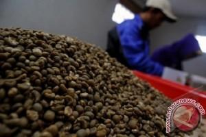 Harga Kopi Luwak Bali Capai Rp60.000/Kg