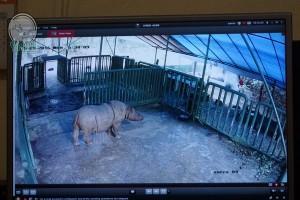 Badak Sumatera di Way Kambas Lahirkan Anak Kedua