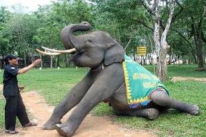 Atraksi Gajah Way Kambas Lampung Kembali Dibuka