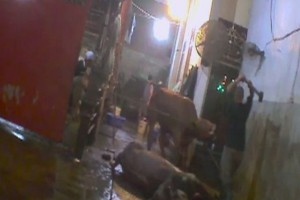Australia bekukan ekspor sapi ke Vietnam