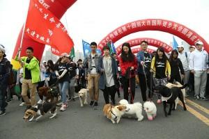 Meski dikecam, China tetap gelar Festival Daging Anjing