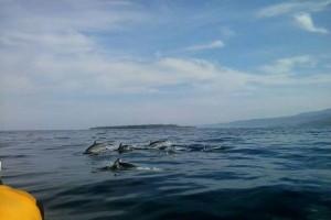 Pulau Pisang Pesona Baru Wisata Maritim Lampung