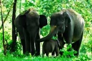 Refleksi Tiga Dekade Konflik Gajah Liar di TNWK