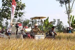 Lampung Targetkan Produksi 4,6 Juta Ton Gabah
